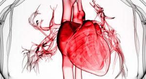Влияние алкоголя на сердечно-сосудистую систему